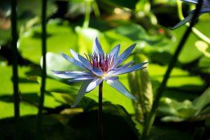 flower-1286081_640